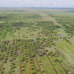 ILUC (Indirect Land Use Change)
